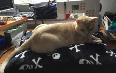Katzen lieben Neles Design!